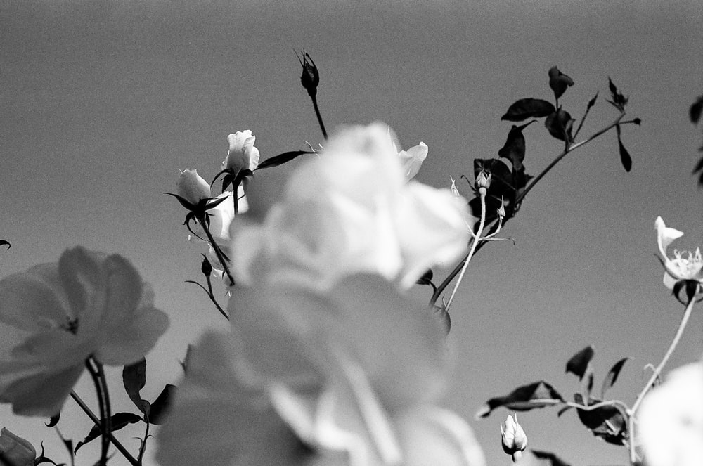 flowers in bloom