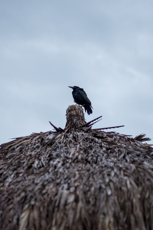 black crow on grey surface