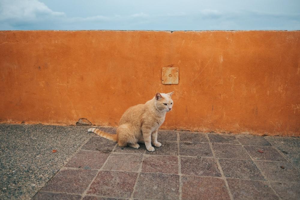 orange tabby cat on floor near wall