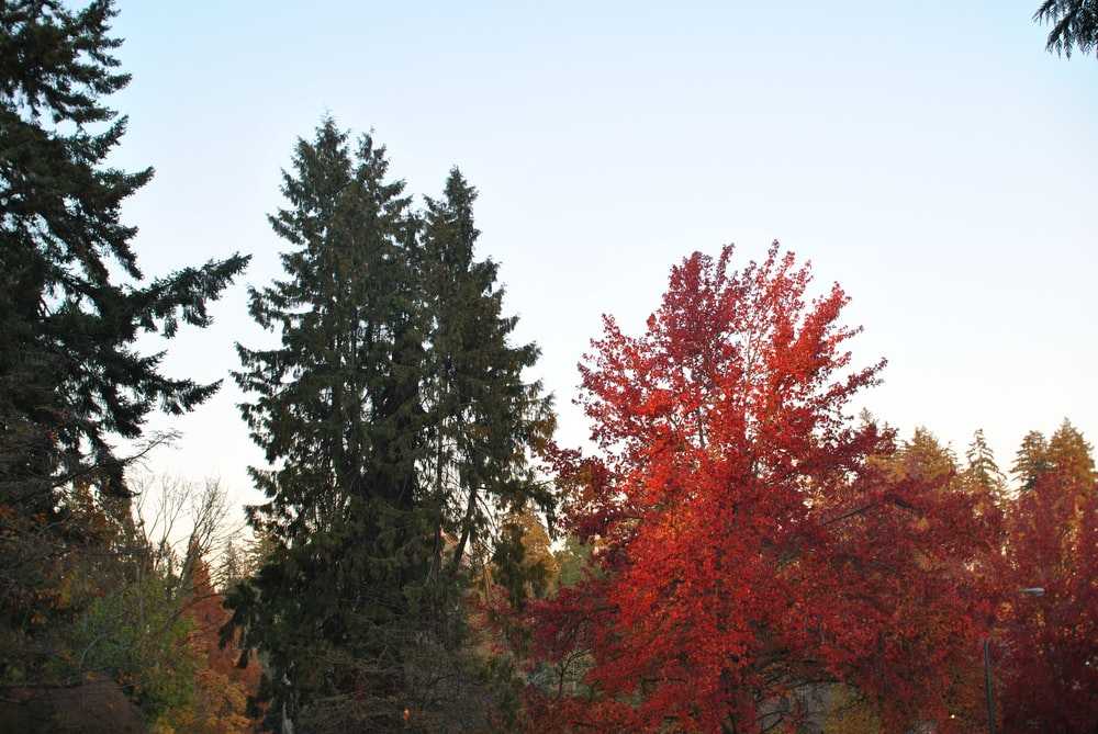 green and orange- trees during daytime