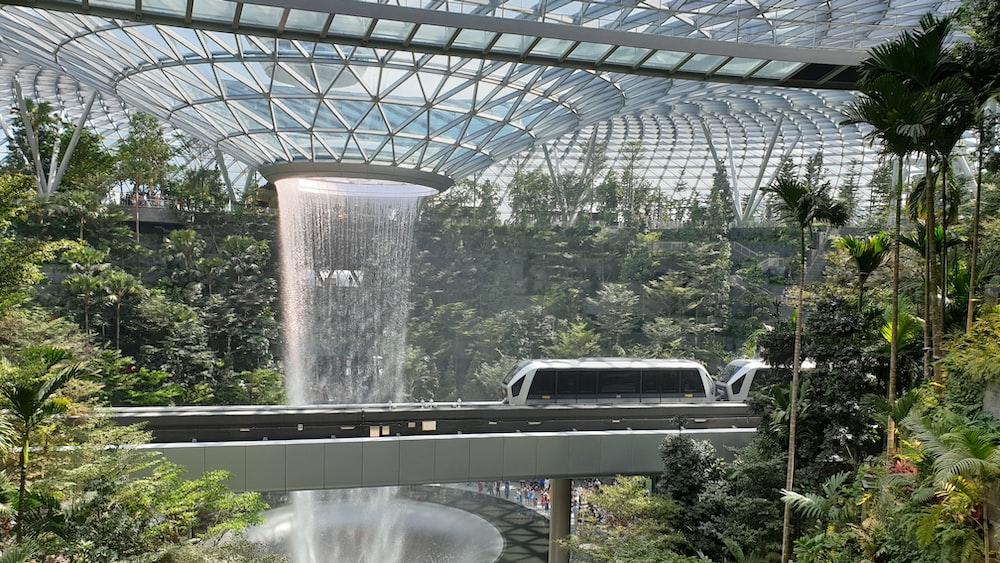 Sunflower Garden at Changi Airport