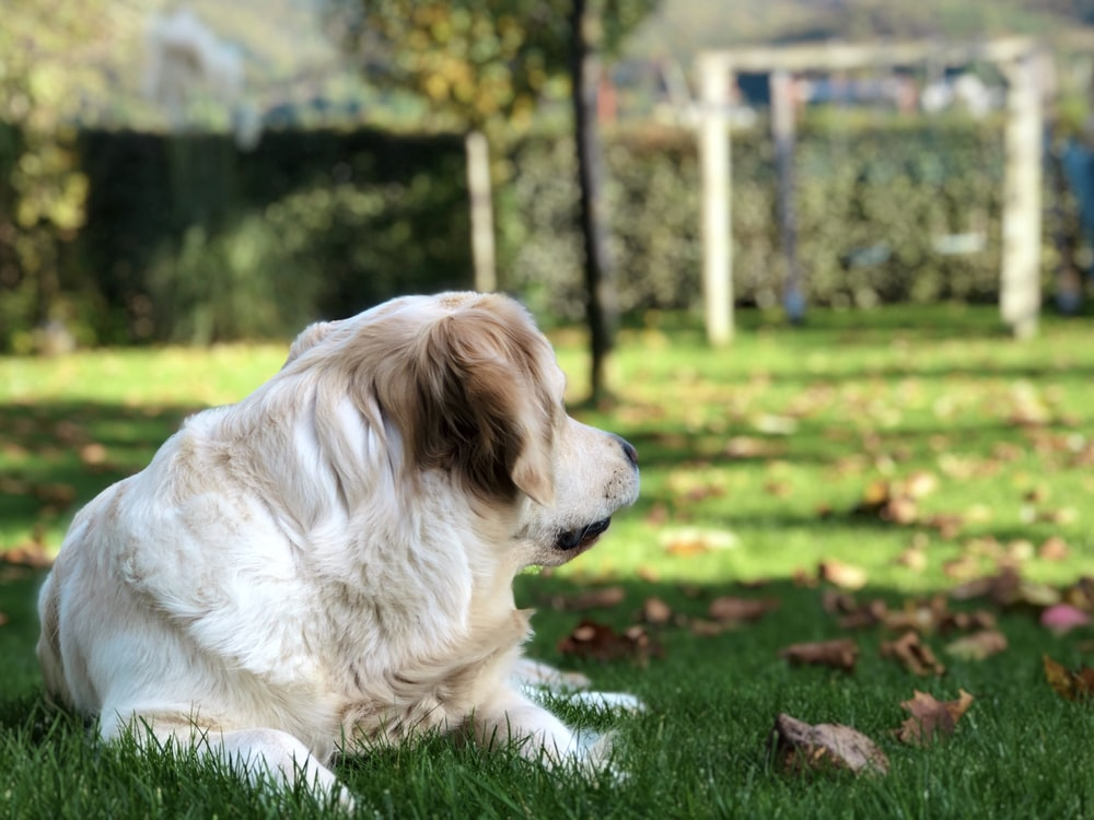 photo of white and brown coated dog on grass field