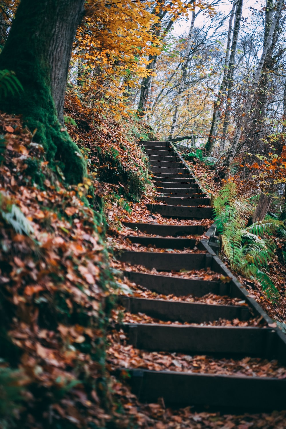 fallen leaves on concrete stairs