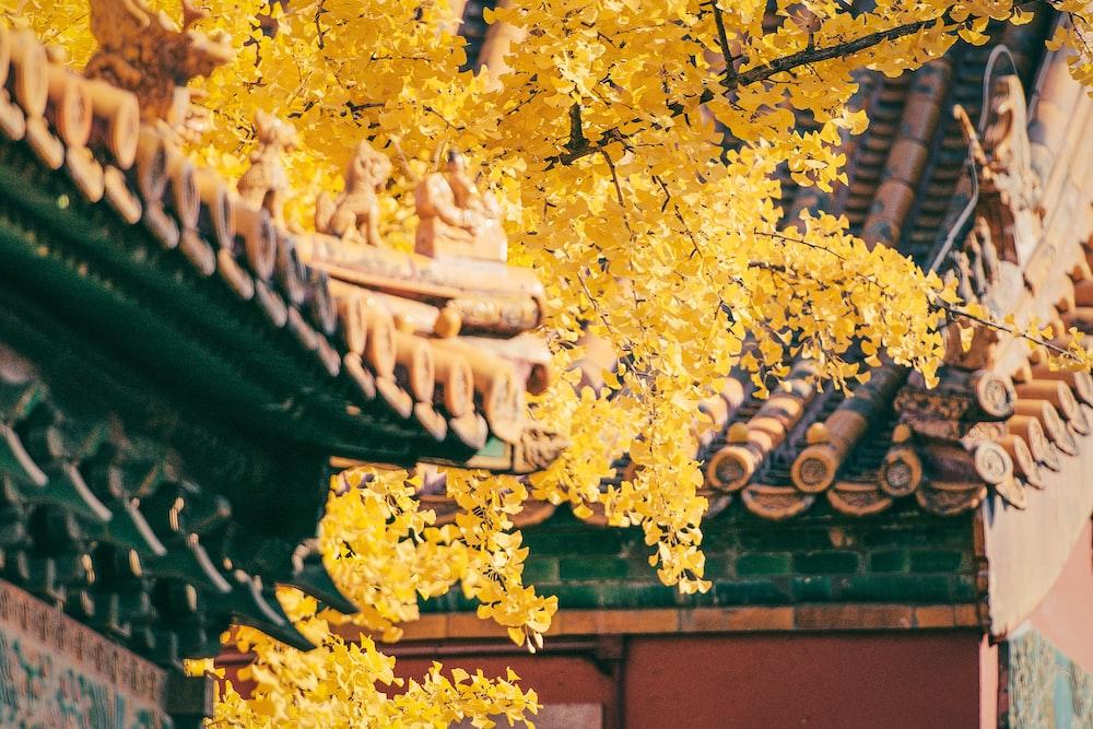 photo of yellow trees