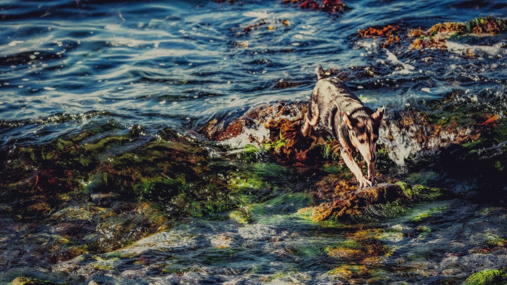 dog walking on rocks