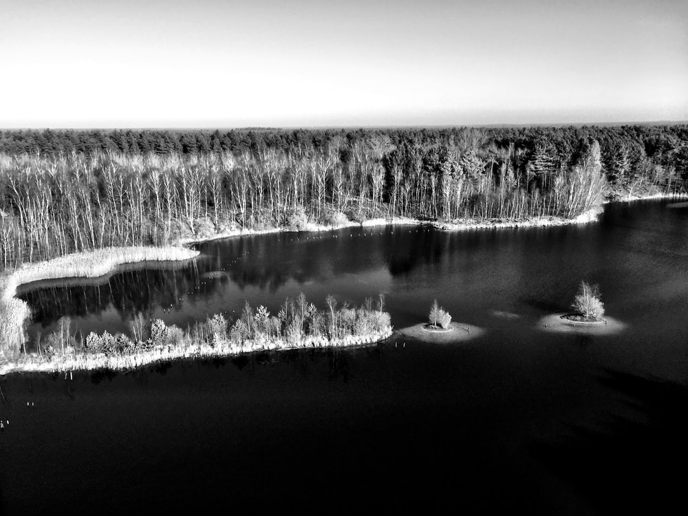 grayscale photography of snow covered trees beside body of water