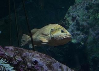yellow and white fish