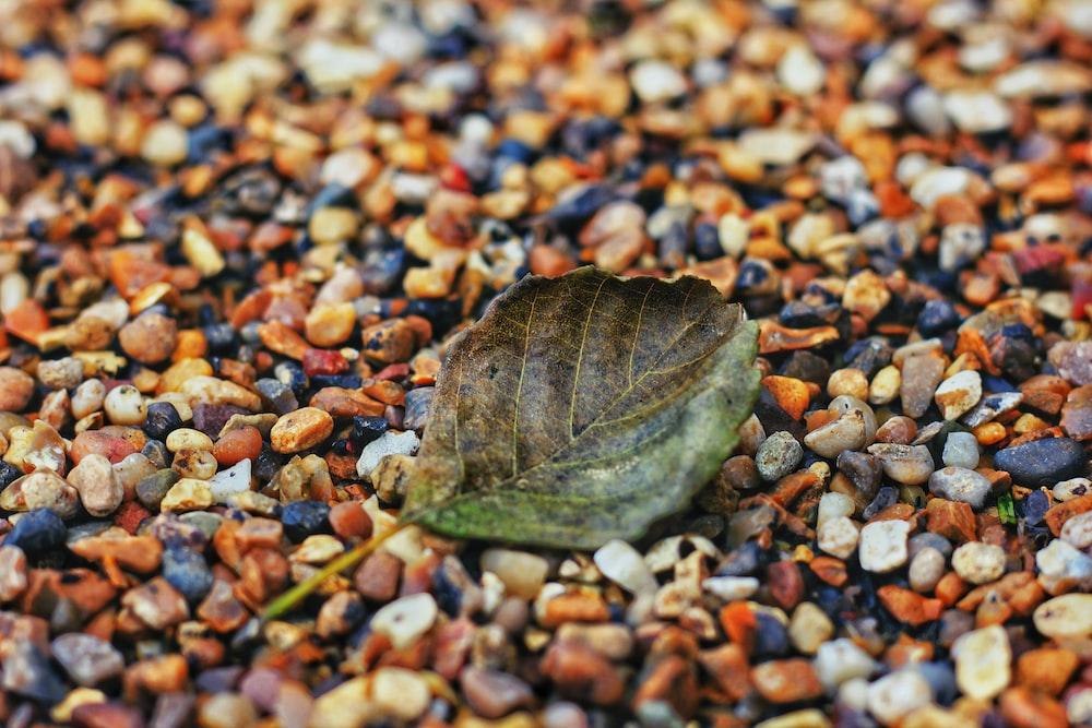 fallen green leaf on stones