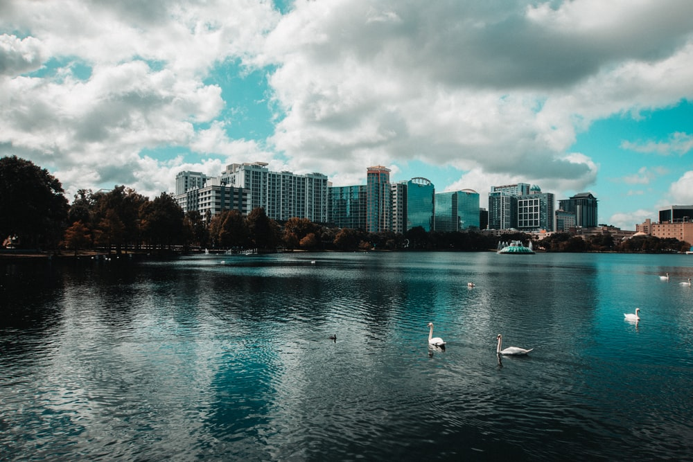 white birds on body of water during daytime