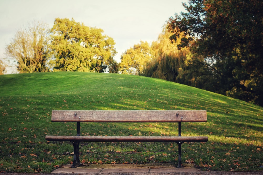 shallow focus photo of brown wooden bench