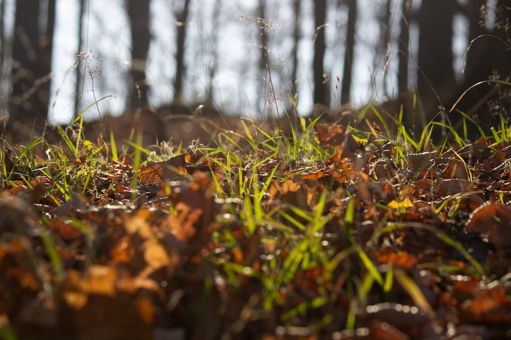 green grass and brown leaves