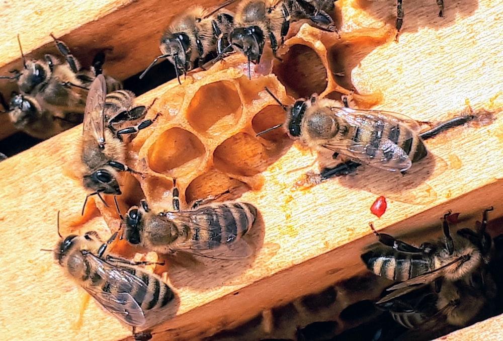 Bee Nests For Wild Bees: Practice Of Beekeeping