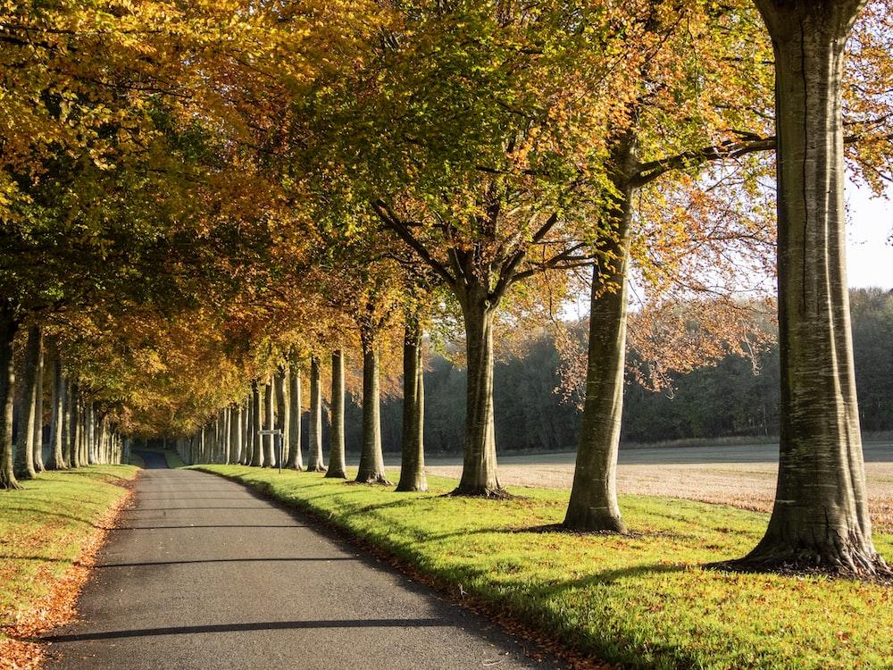 road between orange trees
