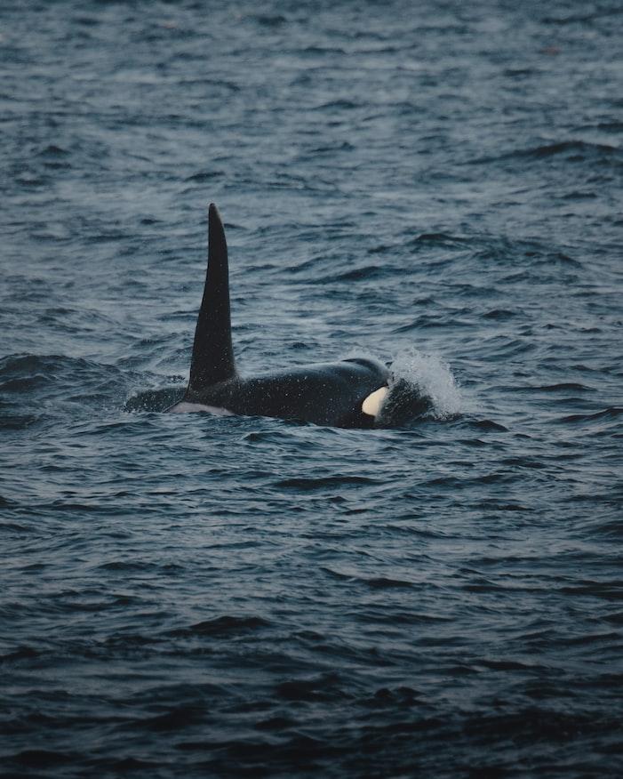 Whale watching - Mirisa