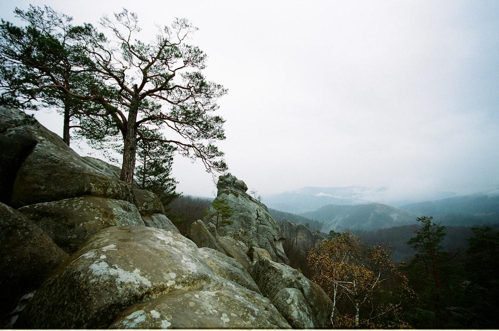 trees beside rocks