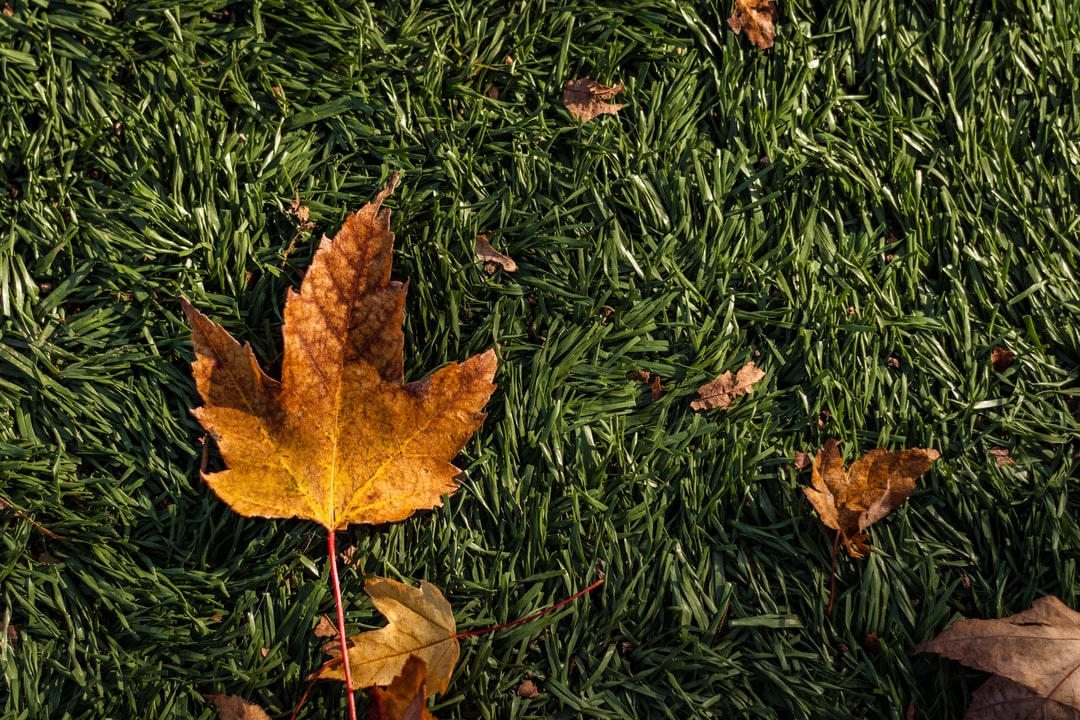Images of fall #002