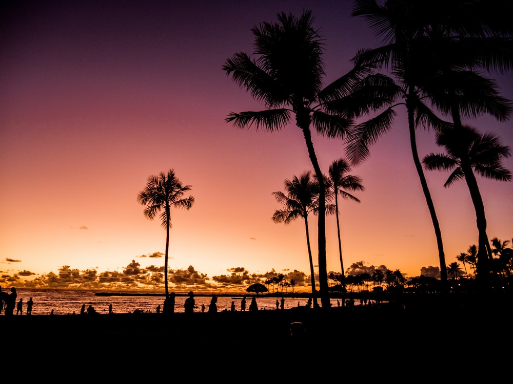 silhouette of palm trees and seashore