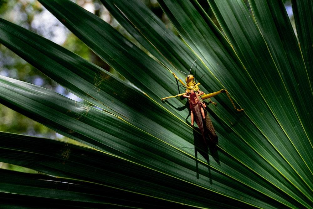 grasshopper on leaf