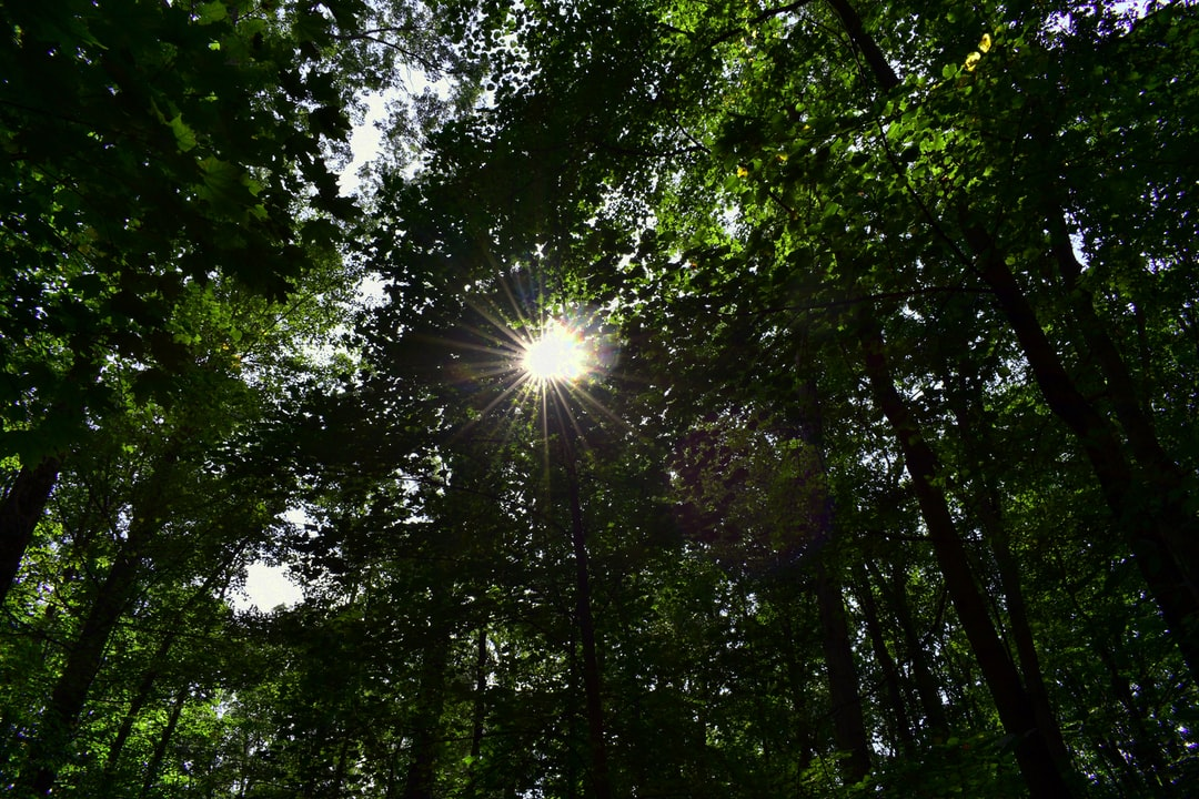In this photograph.. I caught the sun shining through the trees in a beautiful star pattern