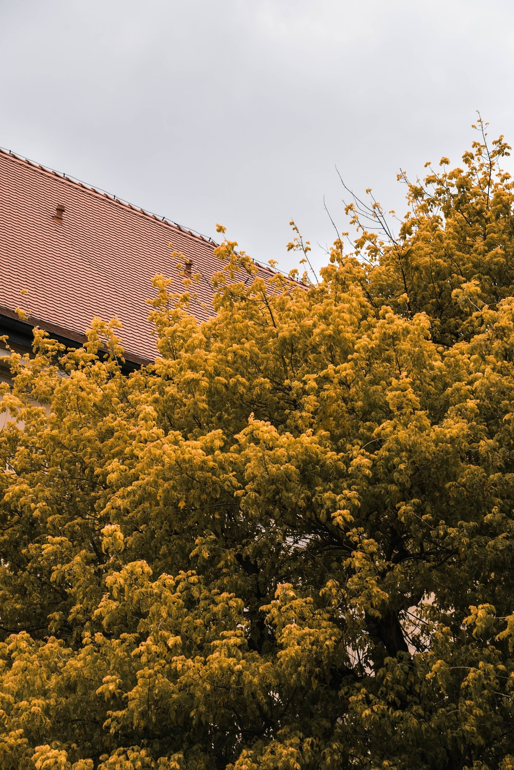 yellow and green tree under white clouds