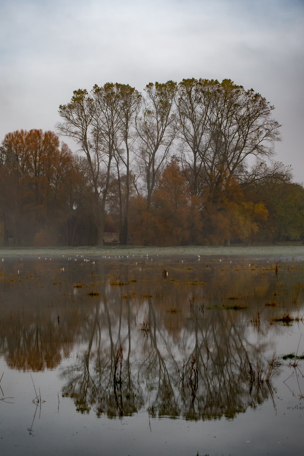 body of water surrounded with orange trees under gray sky