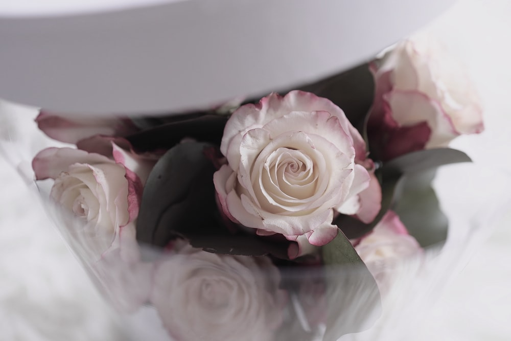 macro photography of white and pink rose flowers