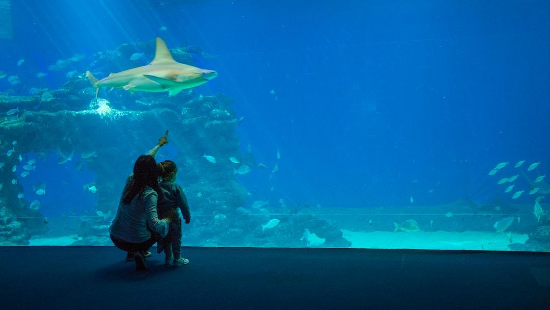 Eilat, Aquapark