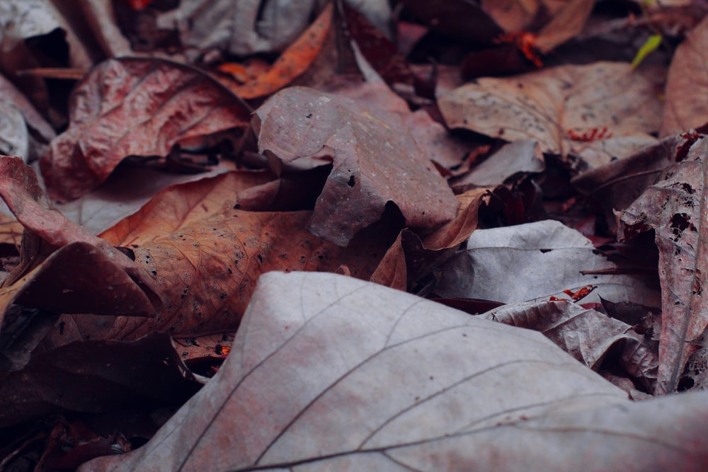 photo of dried leaf