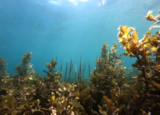 underwater photography of sea plants