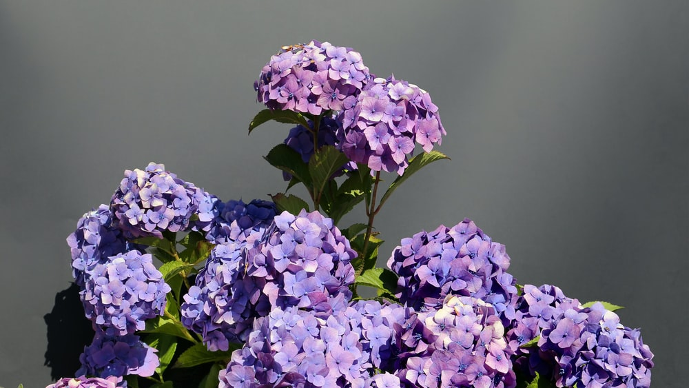 selective focus photo of purple-petaled flowers