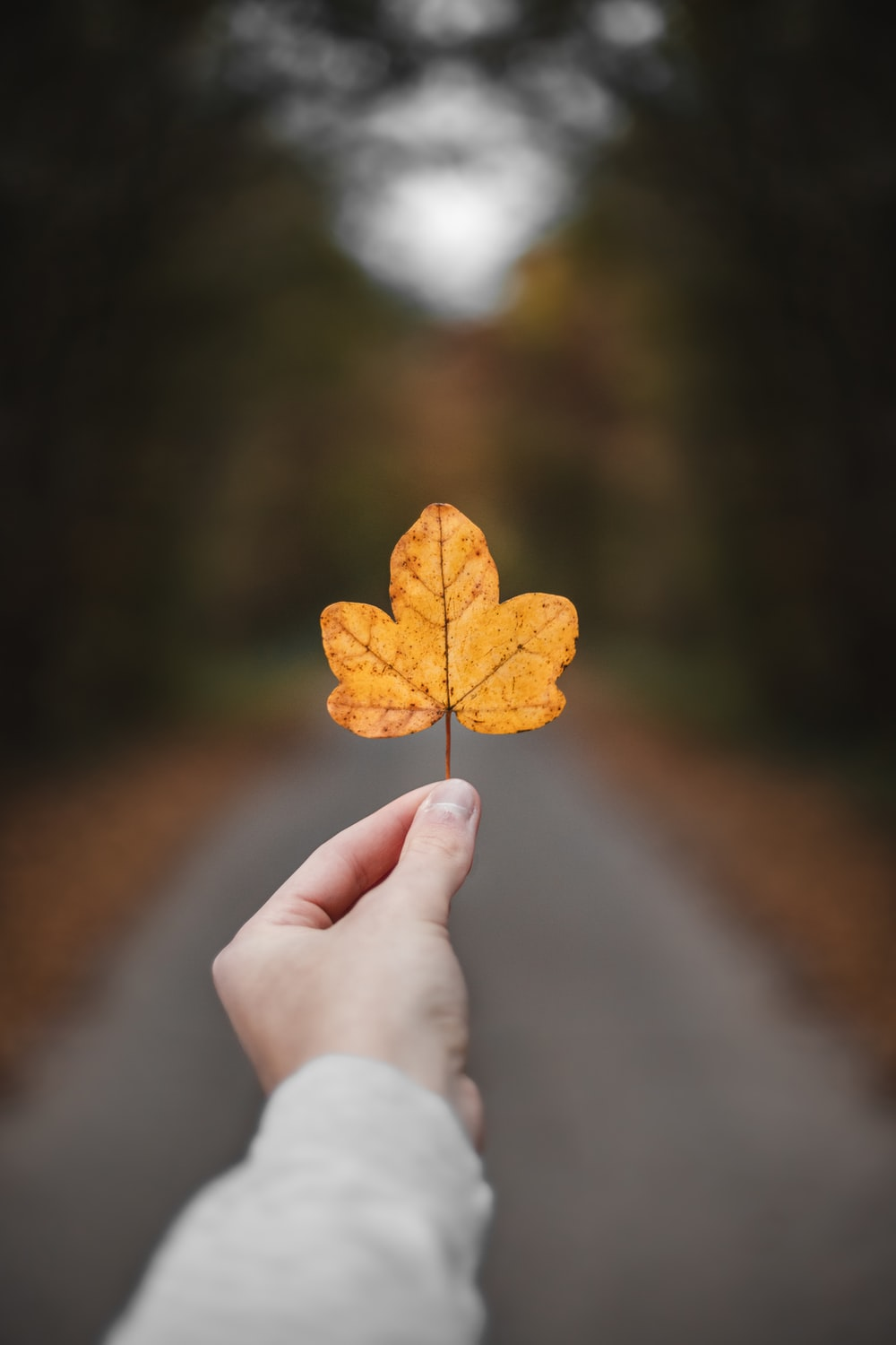 person holding withered leaf