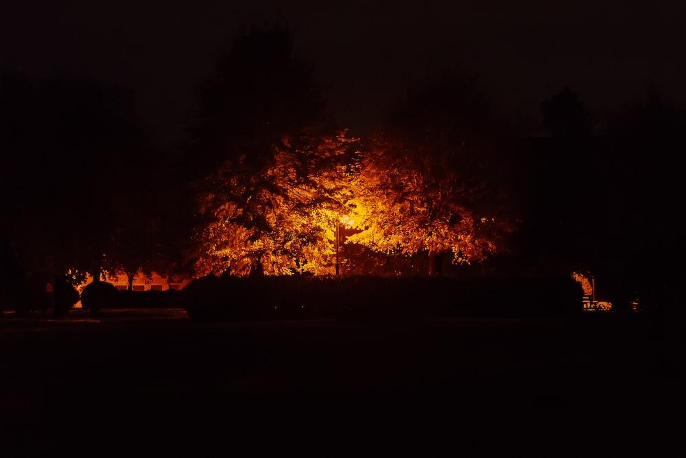 lights under tree at night