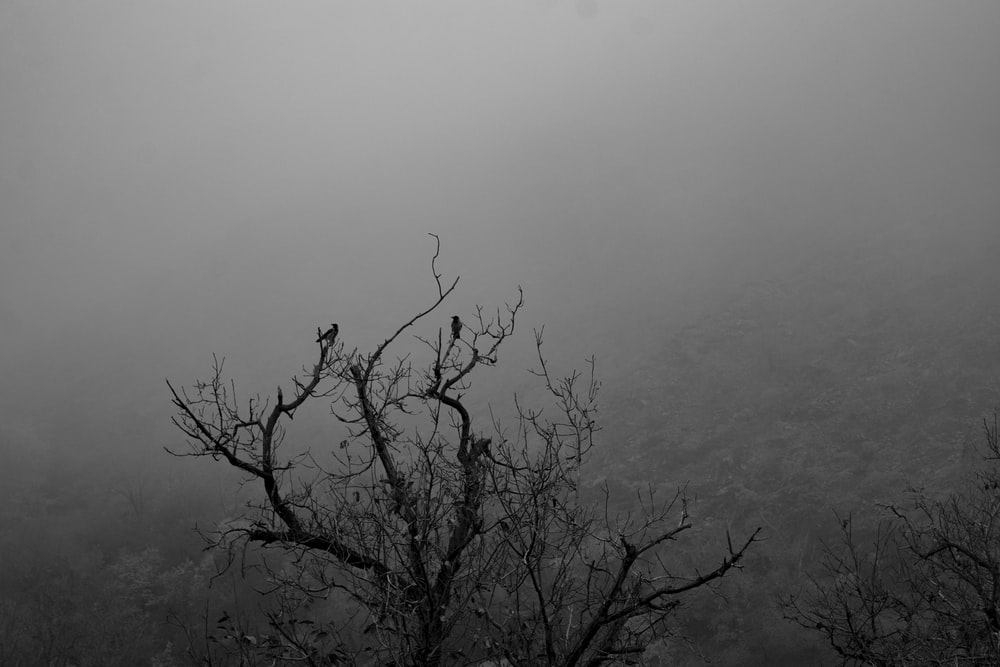grayscale photo of bare tree