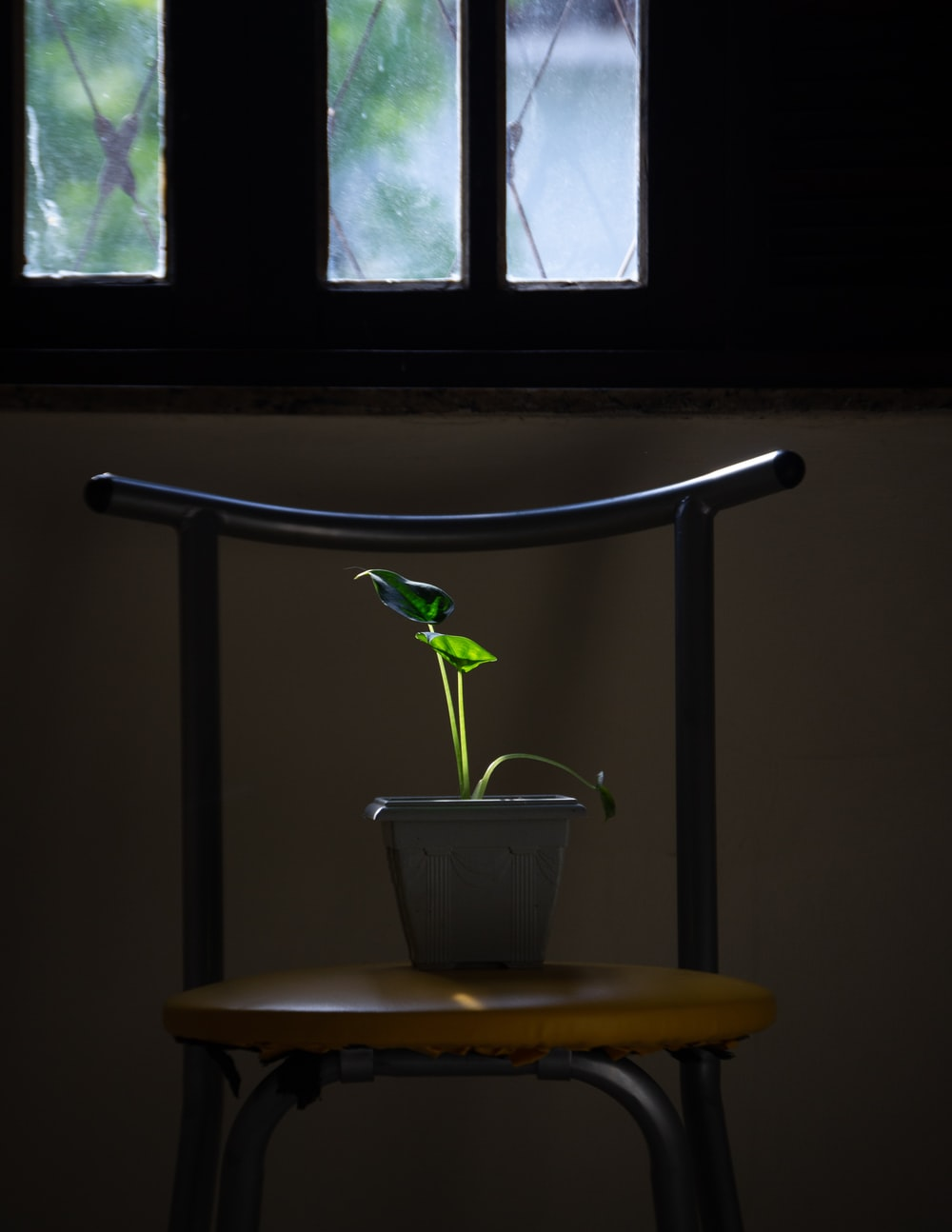 peace lily in pot on chair