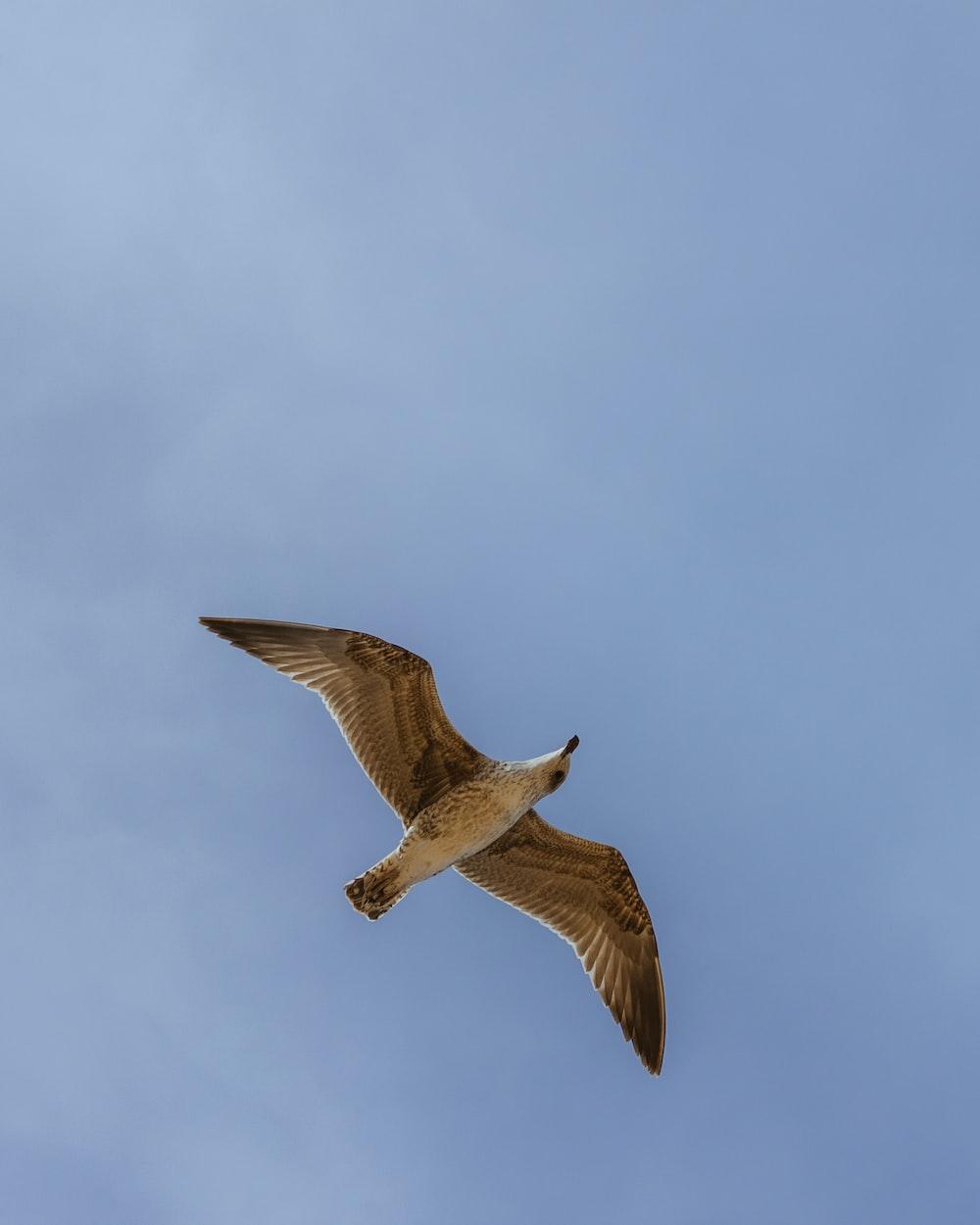 brown bird in flight under blue sky