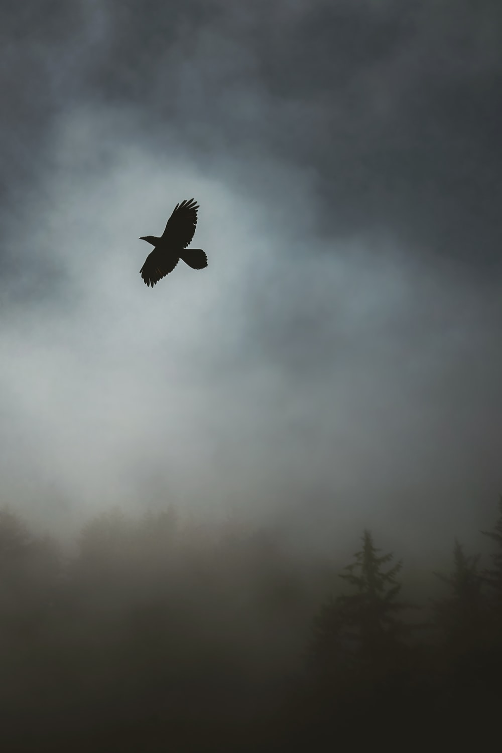grayscale photography of bird flying in the sky