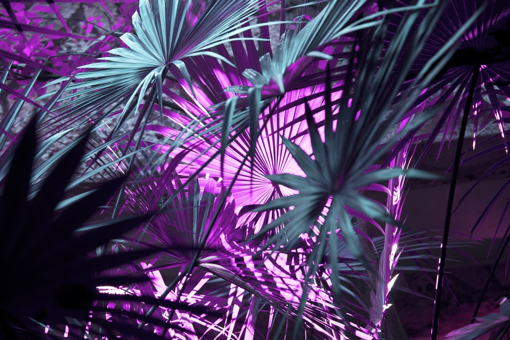 Purple Wallpapers Free Hd Download 500 Hq Unsplash Choose from a curated selection of 4k wallpapers for your mobile and desktop screens. purple wallpapers free hd download