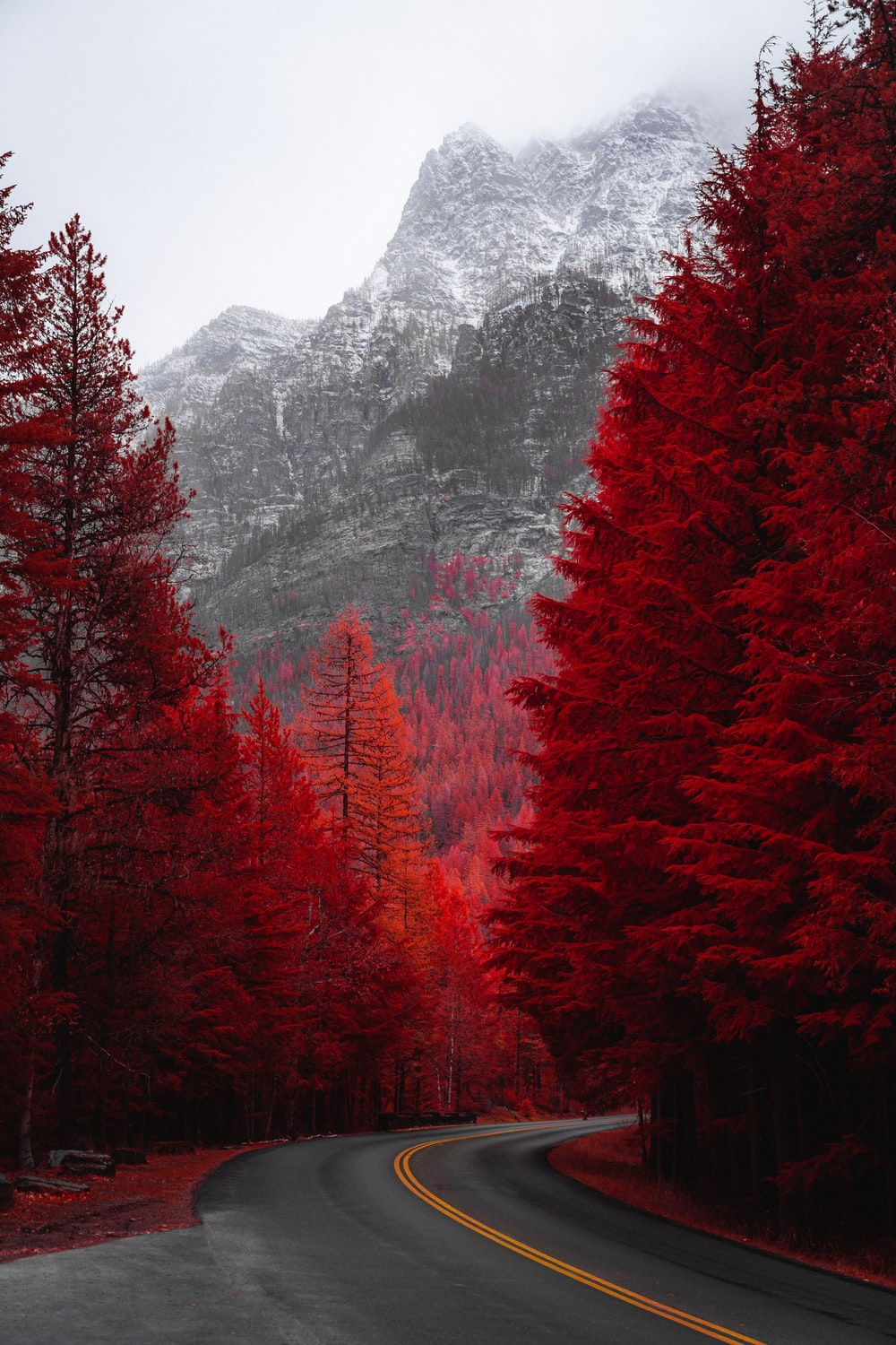 road beside red trees