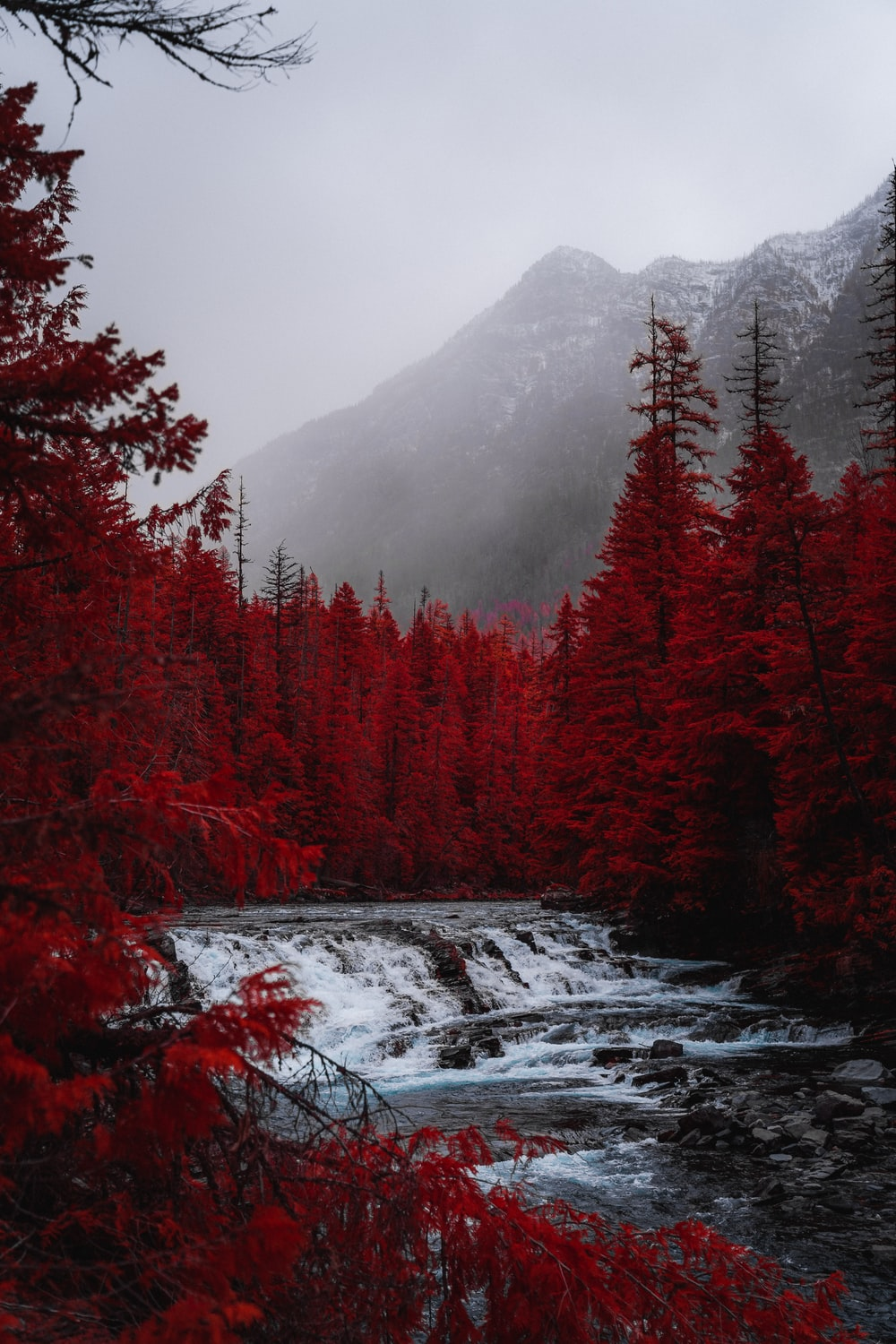 river waterfalls near red trees