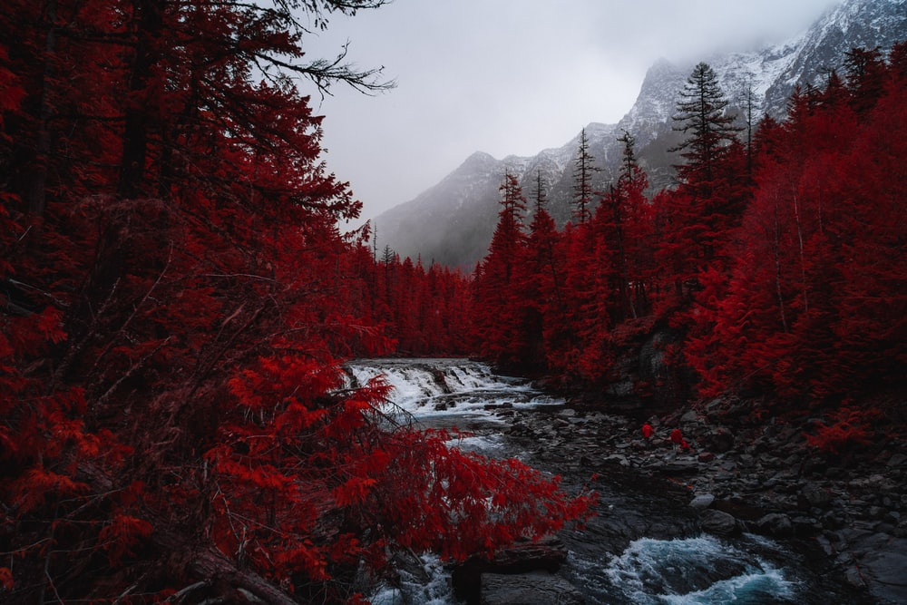 selective color photography of river at forest