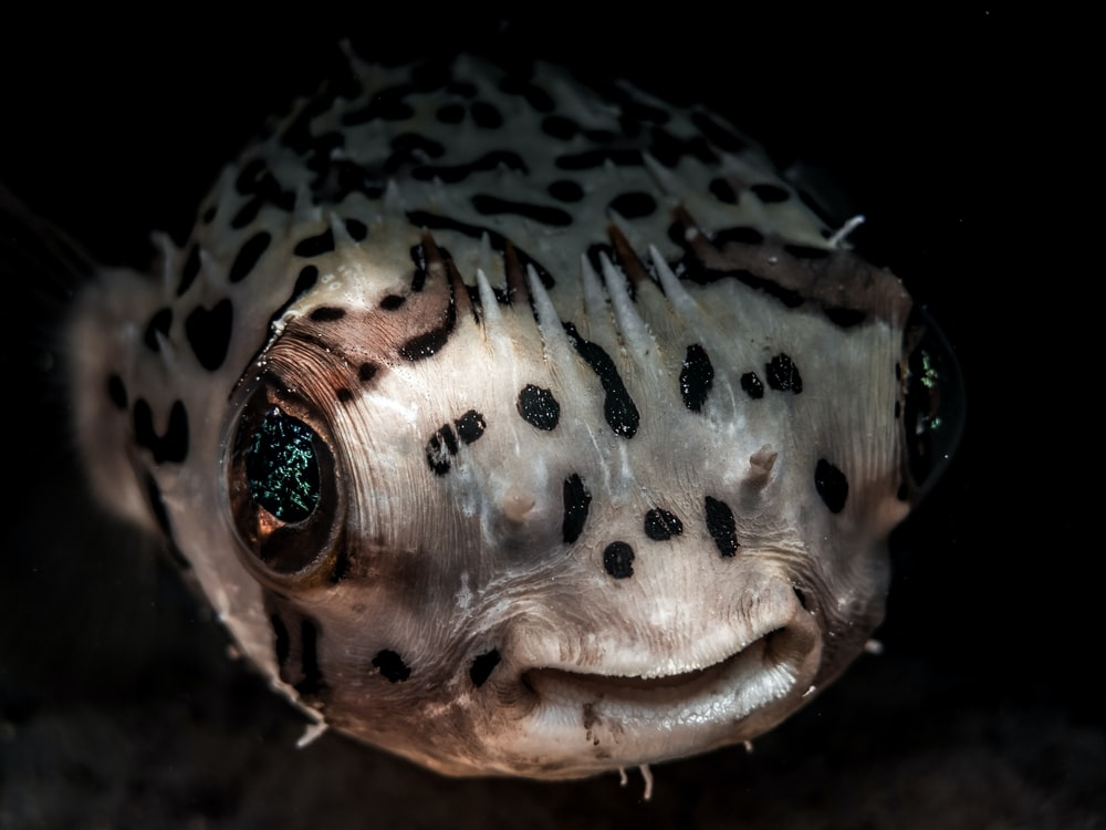 macro photography of white and brown spotted fish