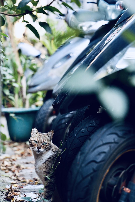 brown tabby cat beside motorcycles