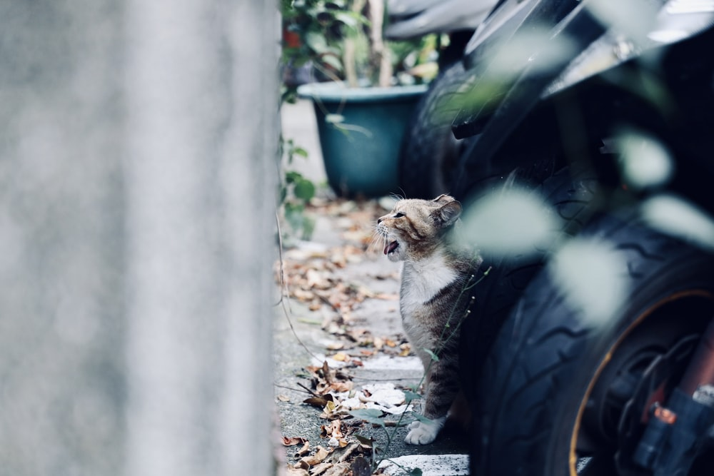 cat beside vehicle