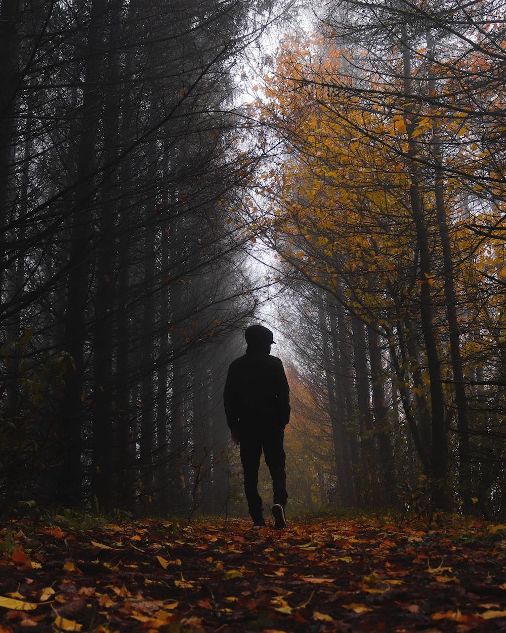 person walking on leafy field near trees