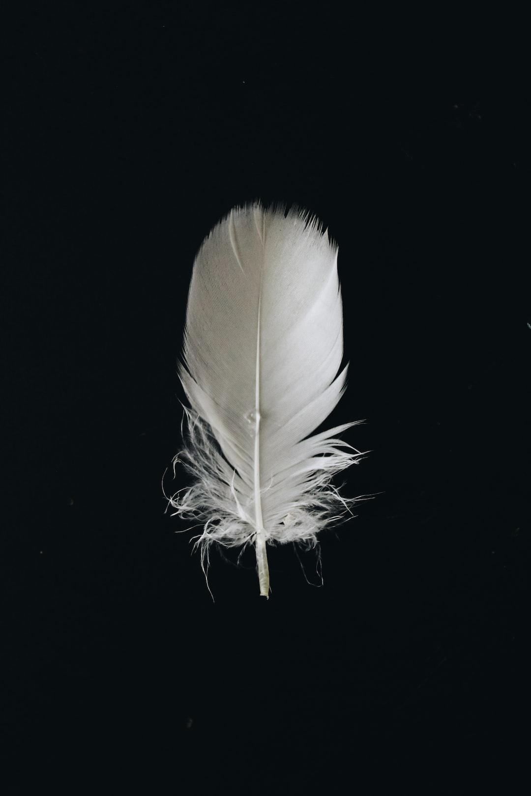 White feather on black background
