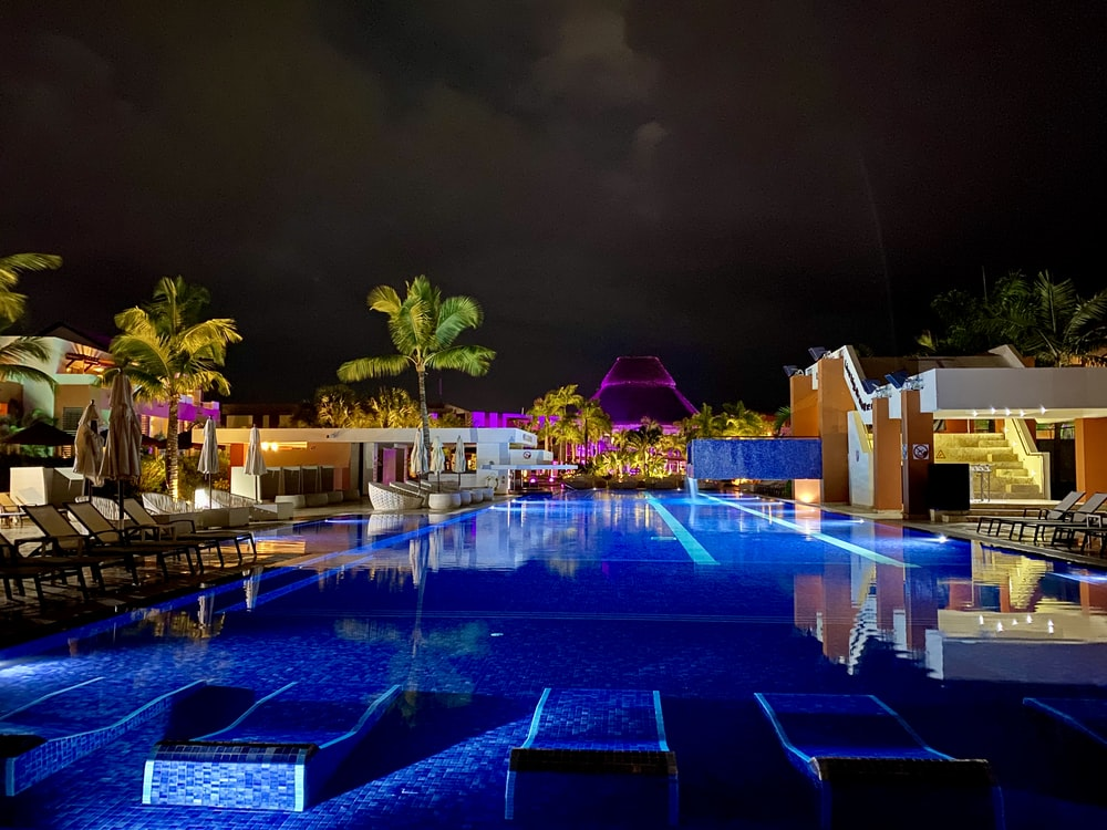 green palm trees beside swimming pool