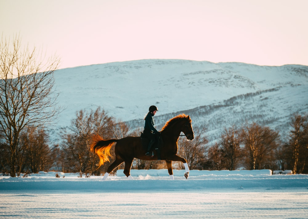 person riding horse on snow during daytime