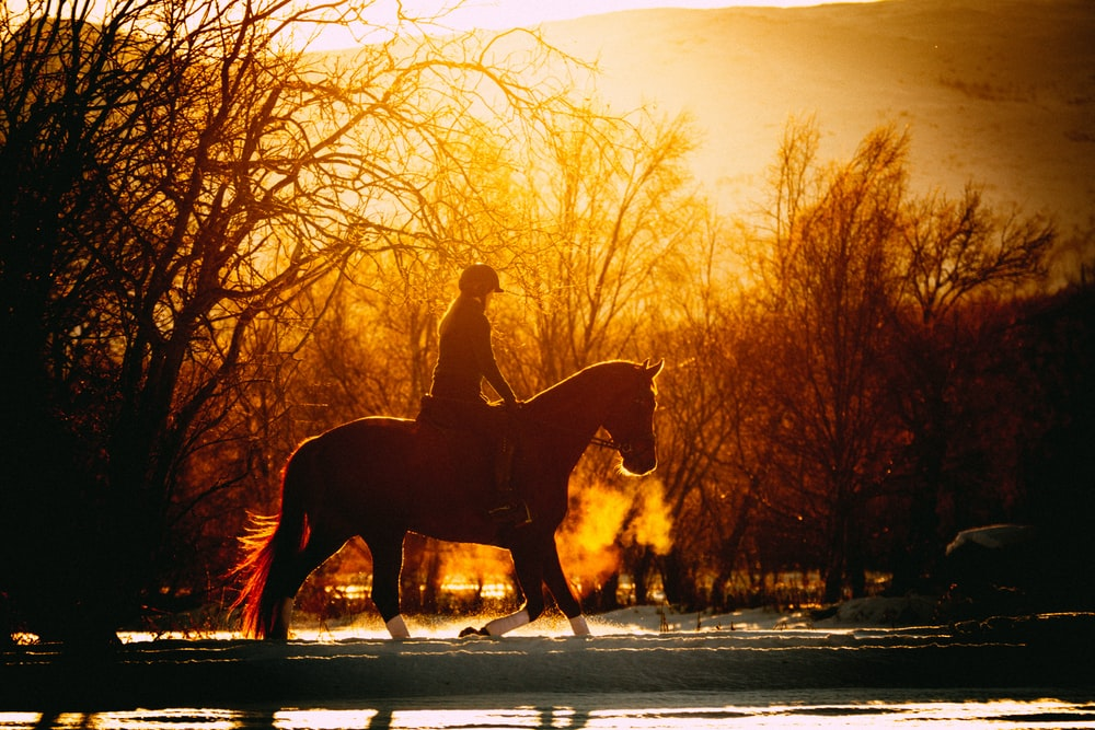 person riding horse during golden hour