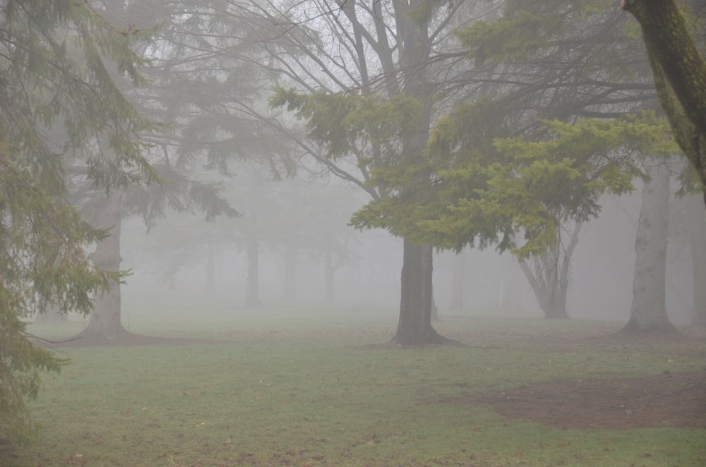 green field and trees in foggy day