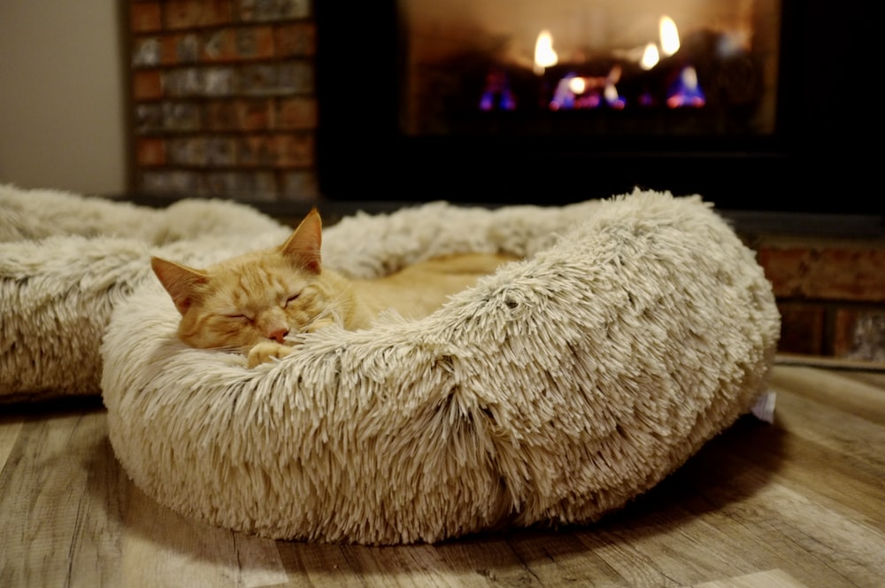 brown and gray tabby cat in pet bed